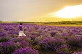 Girl in a lavender field. — Stock Photo