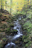 Autumnal Creek — Stock Photo