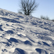 Snow Plain Blown by a Wind — Stock Photo