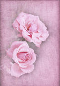 Pink roses on a textured pink background — Stock Photo