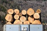 Transportation timber — Stock Photo