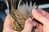 Reed kiraz kuşu — Stok fotoğraf