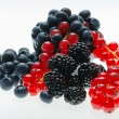 Currants, blueberries and blackberr — Stock Photo