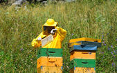 Marcatura dell'ape regina — Foto Stock