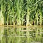 Swamp — Stock Photo #31038133