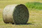 Cylindrical bale of wheat straw — Stock Photo