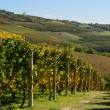 Vineyards in Piedmont — Stock Photo #34225245