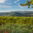 Vineyards in Piedmont — Stock Photo #34225571