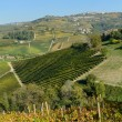 Vineyards in Piedmont — Stock Photo