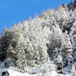 Snowy pine forest — Stock Photo #39106347