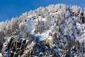 Snowy pine forest - Aosta Valley - Val Veny — Stockfoto