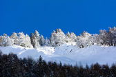 Snowy pine forest — Stock Photo