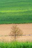 The Lands of Pianalto — Stock Photo