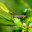 Bug on leaves — Stock Photo #45567697