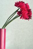 Beautiful flowers in a crimson ceramic  vase — Stok fotoğraf