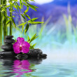 Purple Orchid, Stones and Bamboo on the water — Stock Photo #30579487