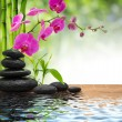 Composition bamboo-purple orchid-black stones — Stock Photo