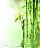 Bamboo stalks on water — Stock Photo