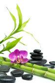 Fialová orchidej s bambusem a černými kameny - bílé pozadí — Stock fotografie