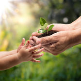 Hands of a child taking a plant from the hands of a man - grass background — Fotografia Stock