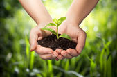 Plant in hands - grass background — Stock Photo