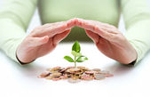 Protect new business start-up - with hands and plant — Stock Photo