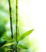 Many bamboo stalks and light beam — Stock Photo