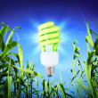 Growth ecology - CF Lamp - green lighting — Stock Photo