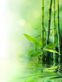 Bamboo stalks on water - blurs — Stock Photo