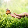 Sustainability concept in green, butterfly and sunshine — Stock Photo #39477907