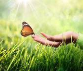 Sustainability concept in green, butterfly and sunshine — Stock Photo