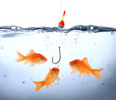 Goldfish in danger - concept deception — Stock Photo