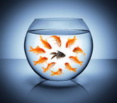 Black fish - diversity concept, racism and isolation — Stock Photo
