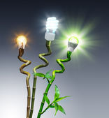 Bulbs in comparison - Halogen, Fluorescent and LED - on bamboo — Stock Photo