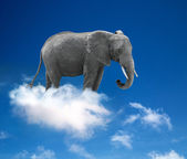 Elephant in the clouds - lightness and fantasy concept — Stock Photo