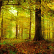 Enchanted Forest on an October morning in Bavaria — Stockfoto