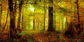 Foresta incantata in una mattina di ottobre in baviera — Foto Stock