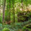 ������, ������: Summer Forest Evening Picture of a Forest in Bavaria Shot was taken on a warm High Summer August day in a rocky forest area in Upper Franconia