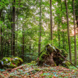 Summer Forest Evening Picture of a Forest in Bavaria Shot was taken on a warm High Summer August day in a rocky forest area in Upper Franconia — Stock Photo #29971845