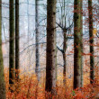 Bavarian November Forrest — Stock Photo