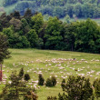 Stok fotoğraf: Herd of Sheep and Goats in spring