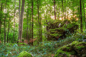 Summer Forest Evening Picture of a Forest in Bavaria Shot was taken on a warm High Summer August day in a rocky forest area in Upper Franconia — Stock Photo