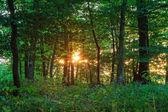 драматические закат в лесу — Стоковое фото