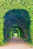 Arch of a Bavarian Hedgemaze — Stock Photo