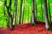 Bavarian Late Summer Forest Picture — Foto Stock