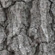 Tree Rind Texture — Stock Photo