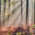 forêt d'automne au beau soleil levant de matin a enchanté — Photo #32951907