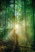 Enchanted Autumn Forest with the lovely rising morning sun — Stock Photo