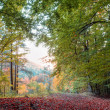 Idyllic Autumn Scenery with Colorful Orange Golden Trees in the rocky Jura Mountains of Bavaria, Germany Sunset in a wonderful forest in the rural countryside — Stock Photo #33341907
