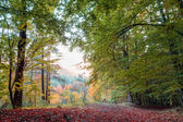 Idyllic Autumn Scenery with Colorful Orange Golden Trees in the rocky Jura Mountains of Bavaria, Germany Sunset in a wonderful forest in the rural countryside — Stock Photo